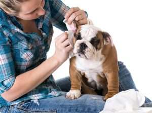 Cleaning a dogs ears